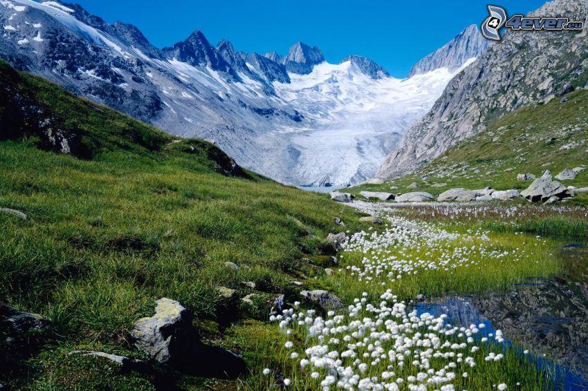 spring flowers, valley, mountains, snow, Switzerland