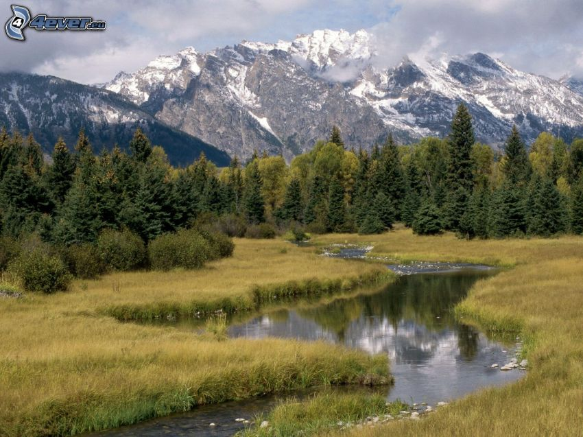 stream, dry grass, coniferous trees, snowy mountains, rocky mountains