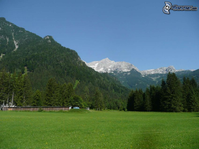 Totes Gebirge, meadow, coniferous forest, rocky mountain