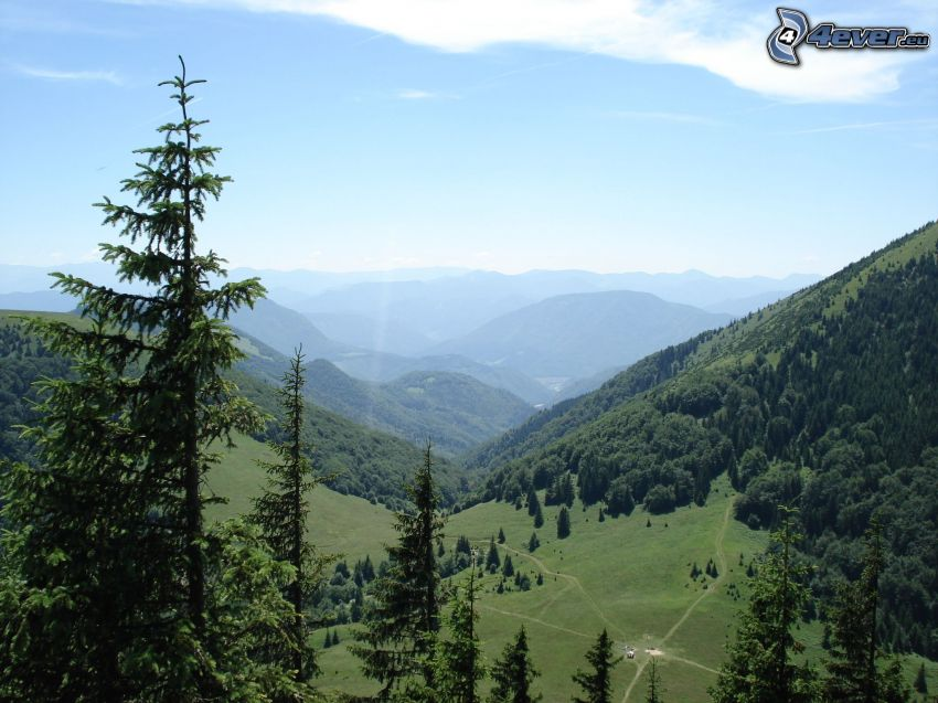 valley, coniferous trees, mountain, hill