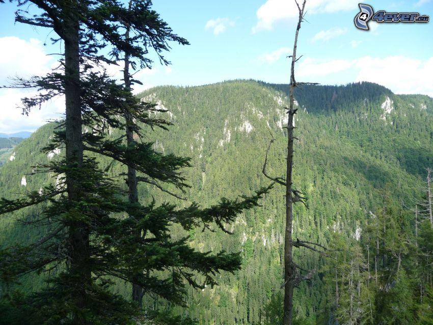 Veľká stožka, forest, Muránska planina, Slovak Ore Mountains