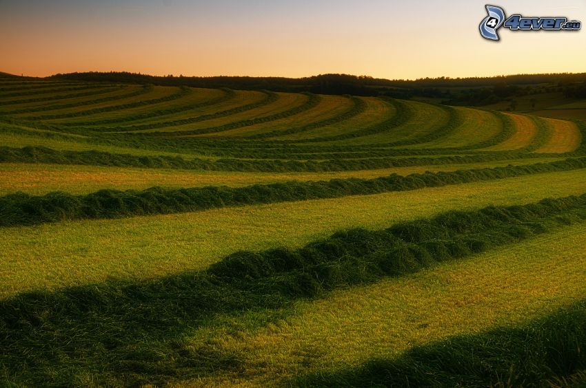 mown field, after sunset