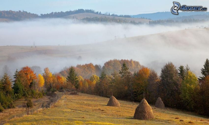 mown field, colorful autumn trees, hills, ground fog