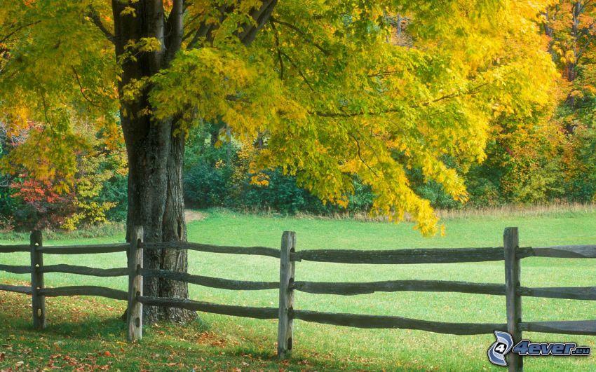 palings, autumn tree, lawn