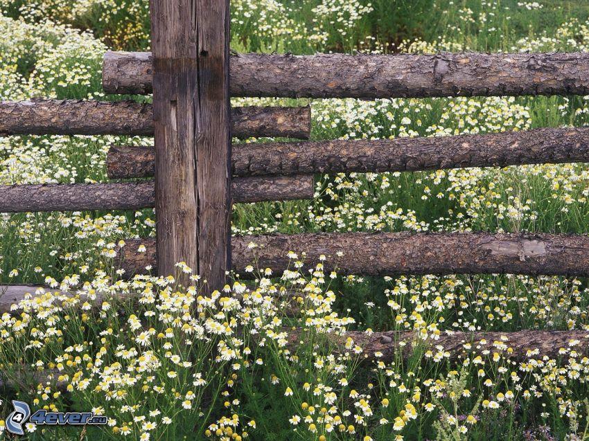 palings, daisies