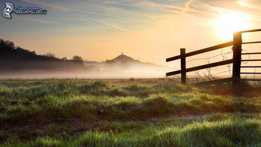 palings, grass, ground fog
