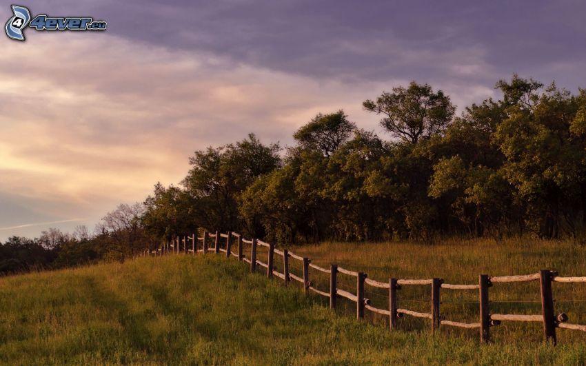 palings, meadow, forest, purple sky