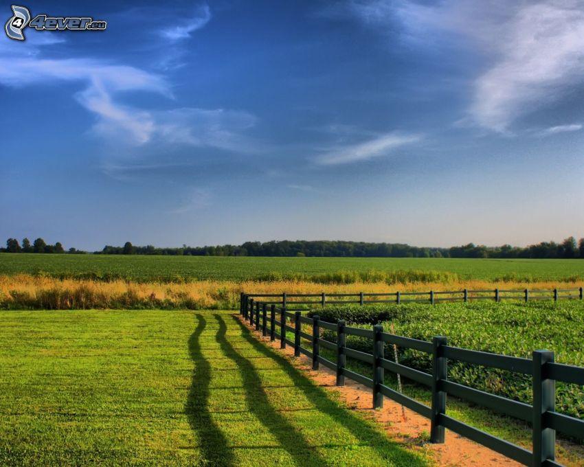 palings, meadows
