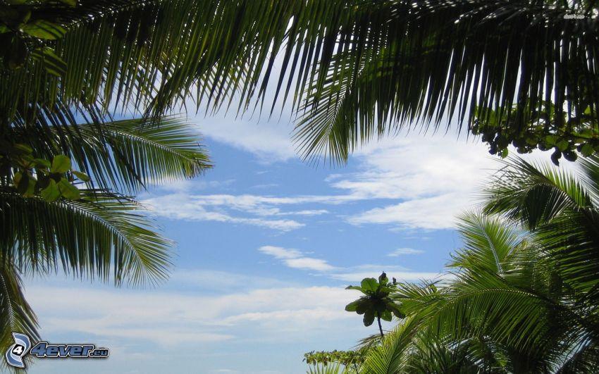 palm trees, clouds, greenery