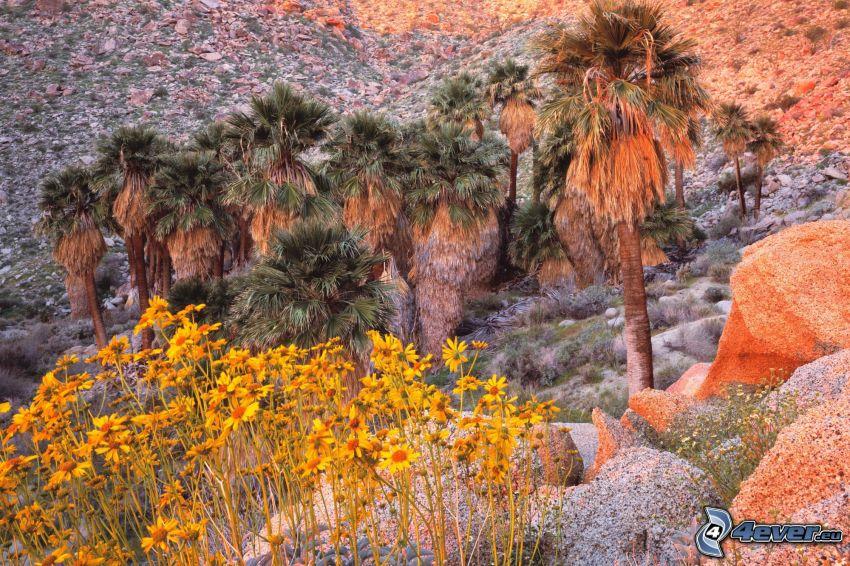 palm trees, flowers, rocks