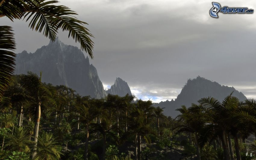 palm trees, high mountains