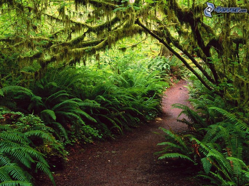 path, ferns, greenery