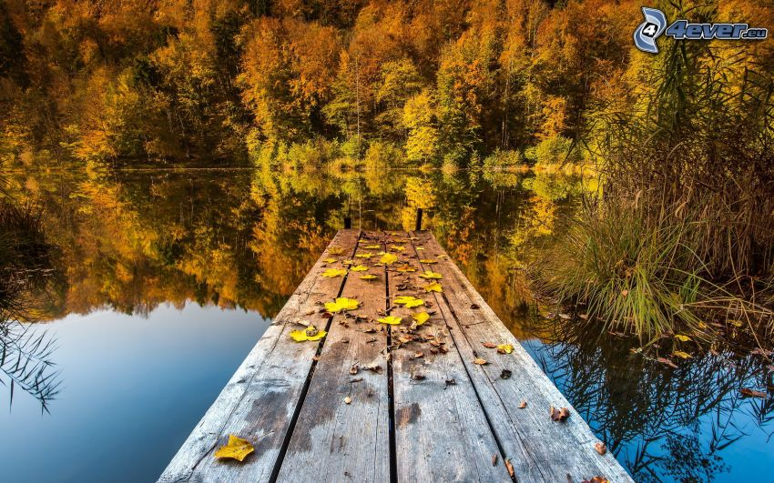 pier, calm lake level, yellow autumn forest
