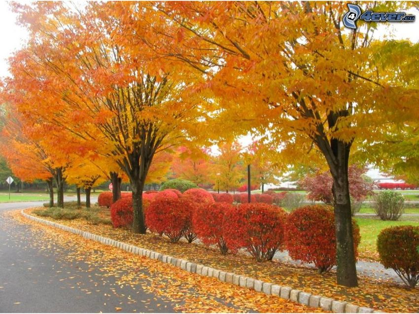 autumn park, avenue of trees, city, road, yellow leaves