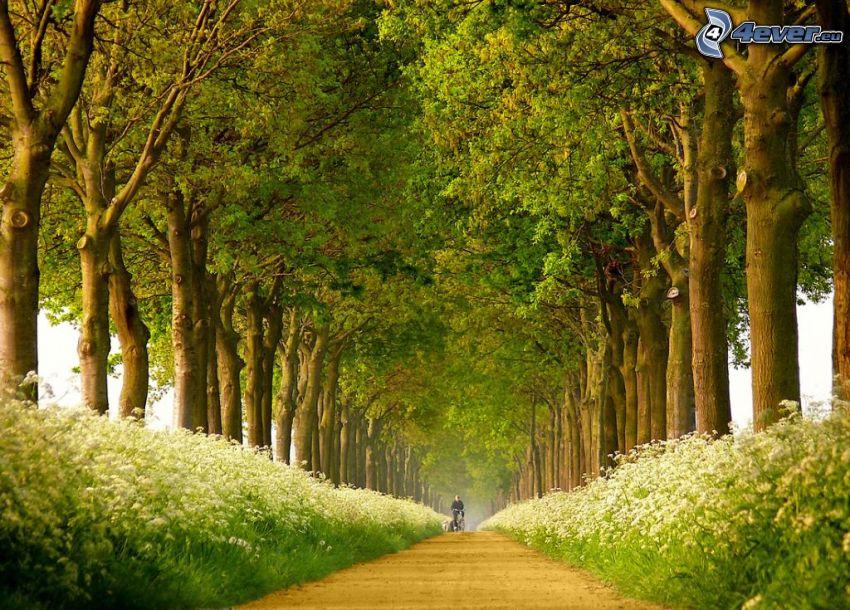 avenue of trees, flowers, sidewalk