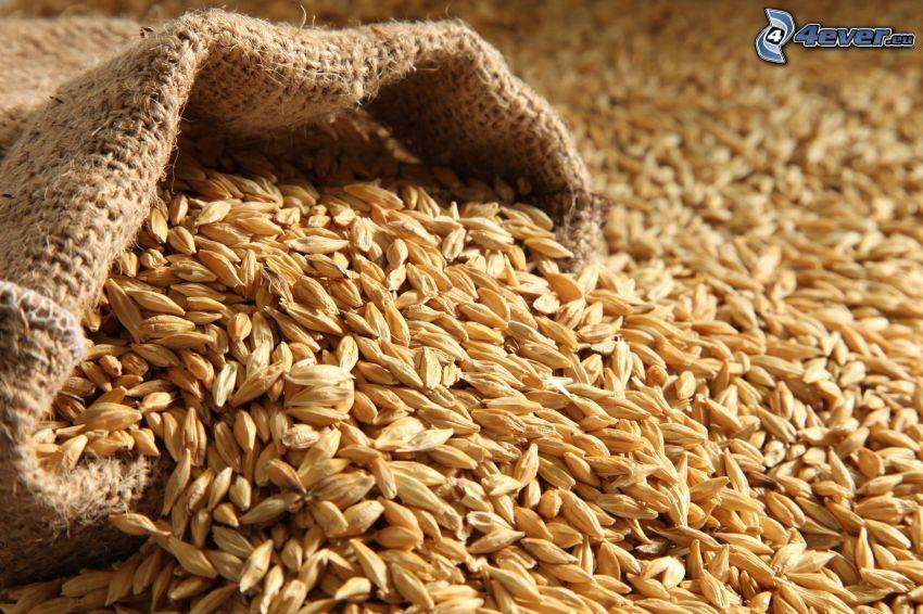 barley, sack