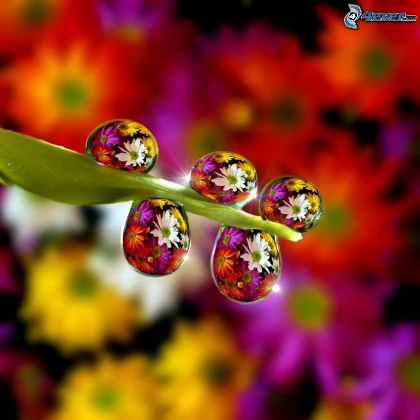 blade, drops of water, colored flowers, Photoshop