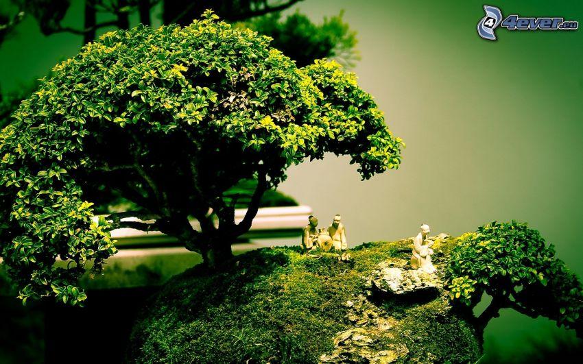 bonsai, tree, people, greenery