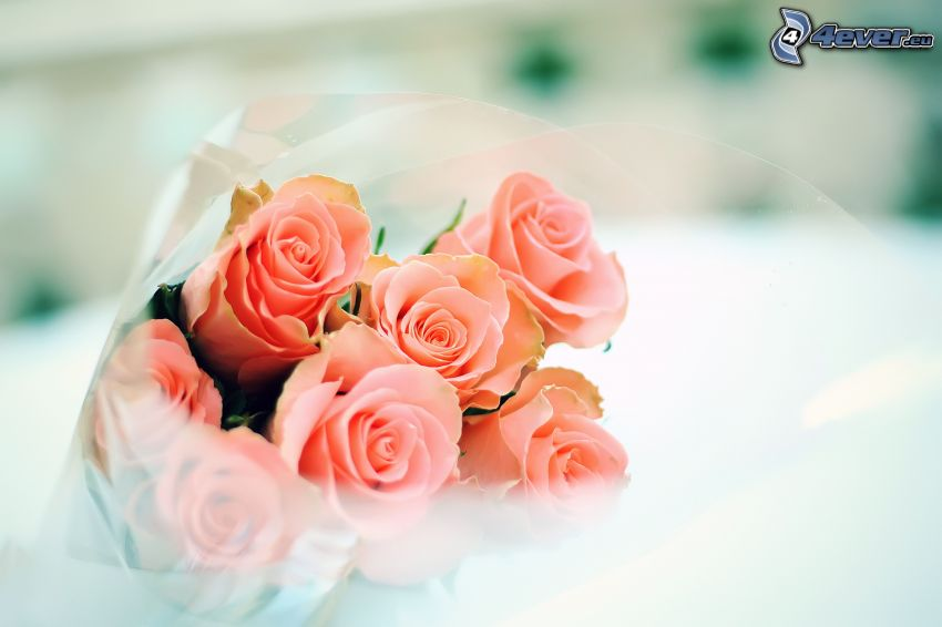 bouquet of roses, pink roses