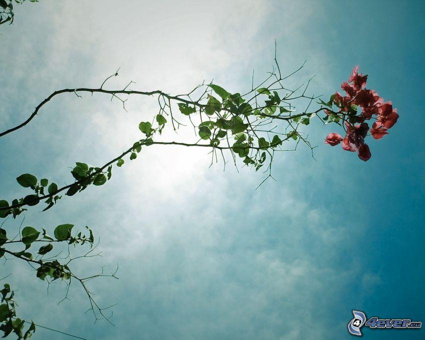 branch, flowers, sky