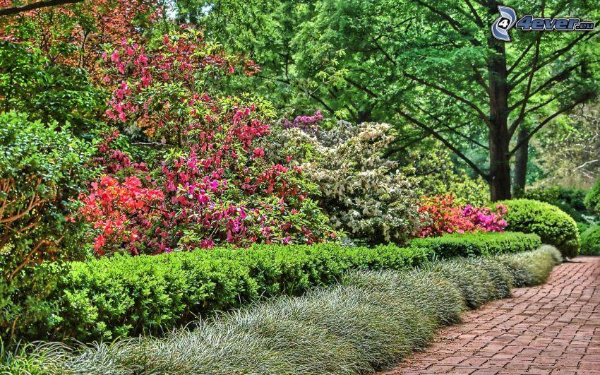 bushes, sidewalk