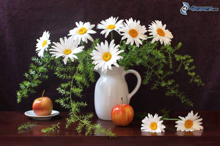 daisies, vase, apples