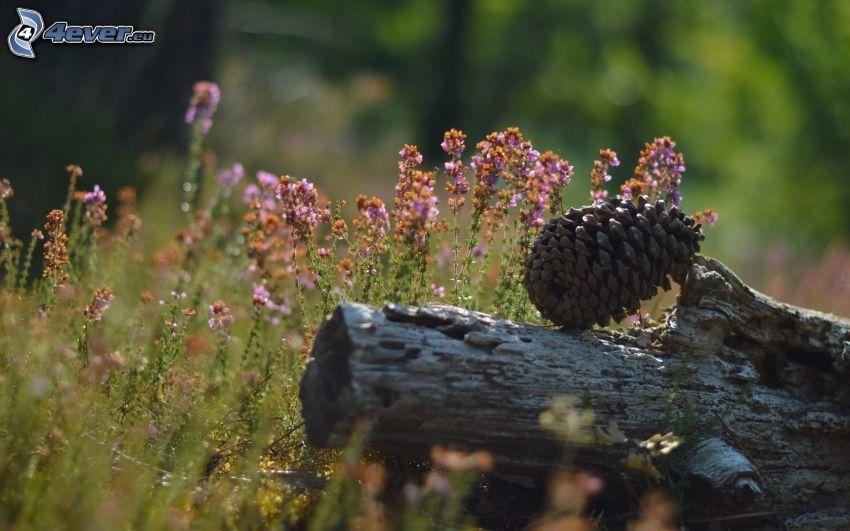 donut, field flowers, branch