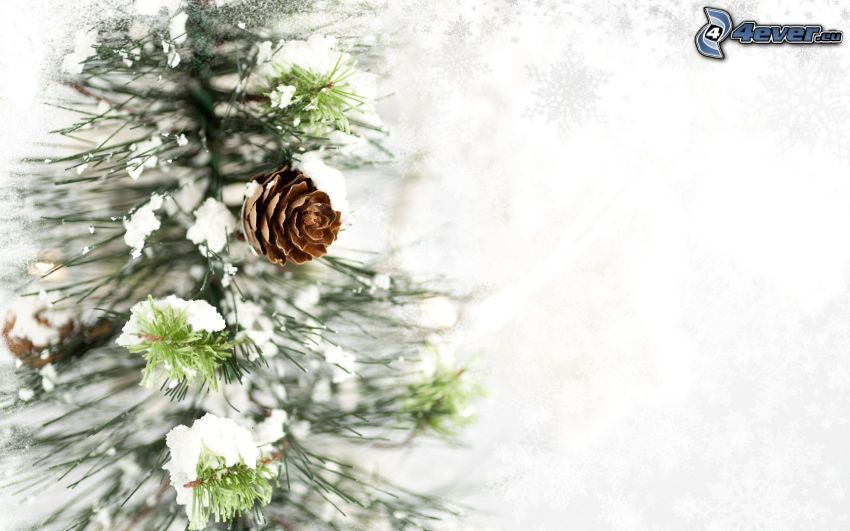 donut, snow, coniferous branches