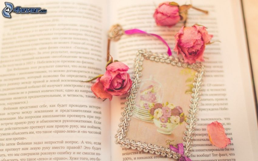 dried flowers, roses, picture, book