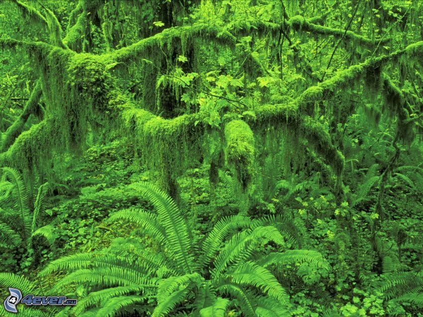 ferns, greenery, jungle