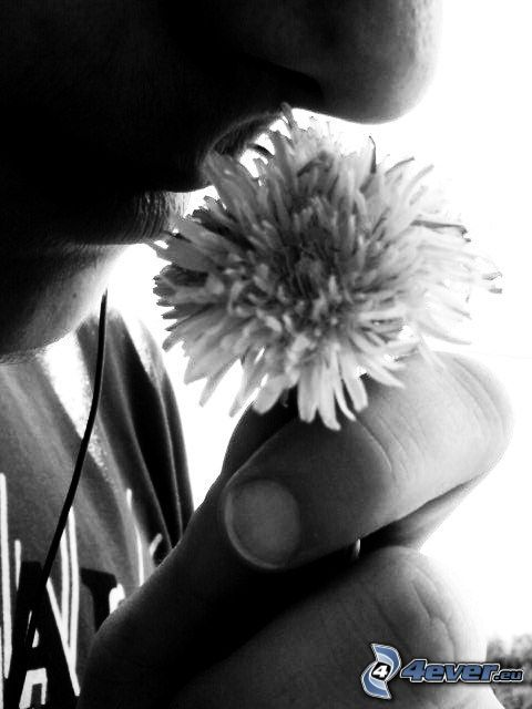 flower, mouth