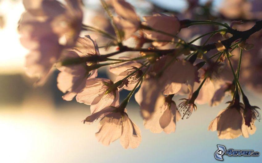 flowering twig, sun