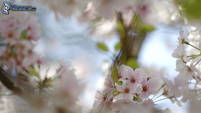 flowering twig