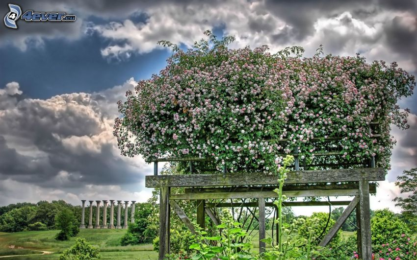 flowers, clouds, HDR