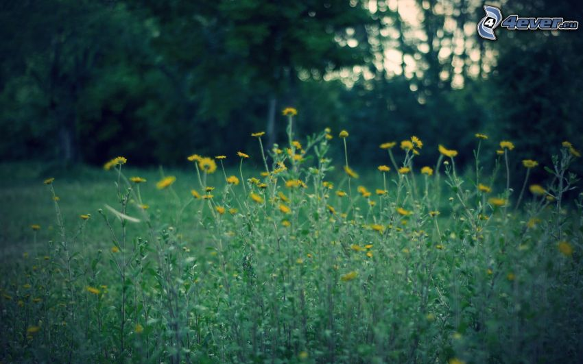 flowers, plant