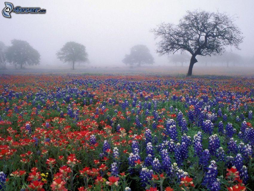 flowers, trees, ground fog
