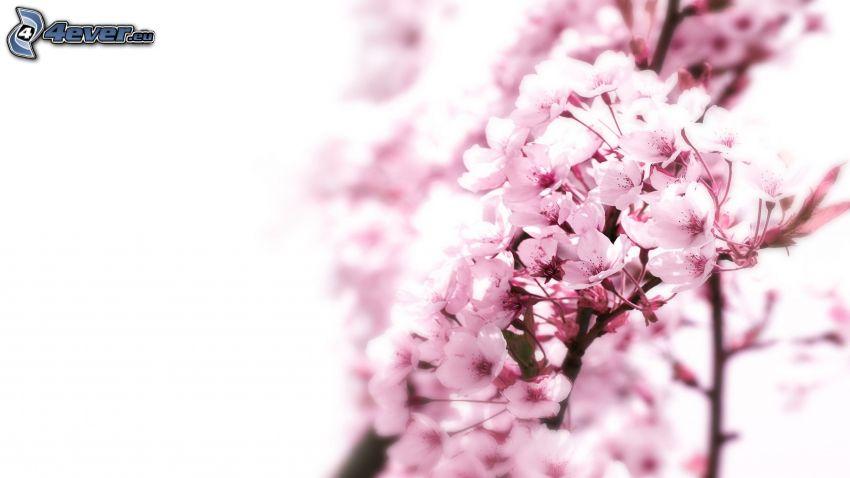 flowery branch