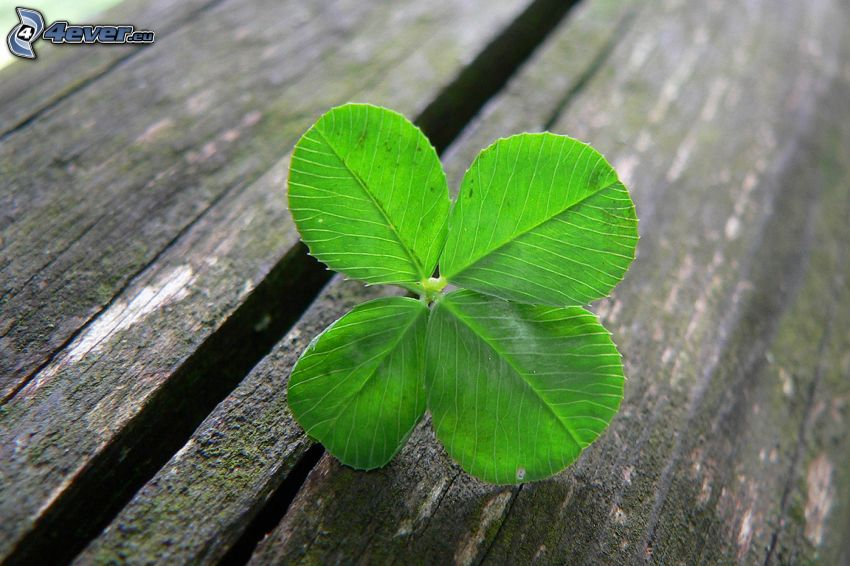 four-leaf clover, wood