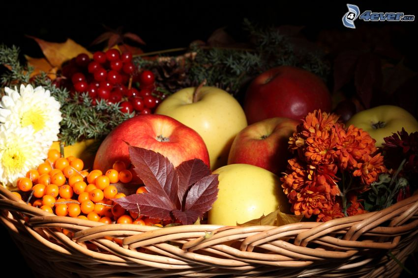 apples, flowers