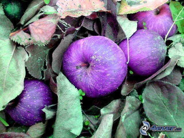 apples, leaves