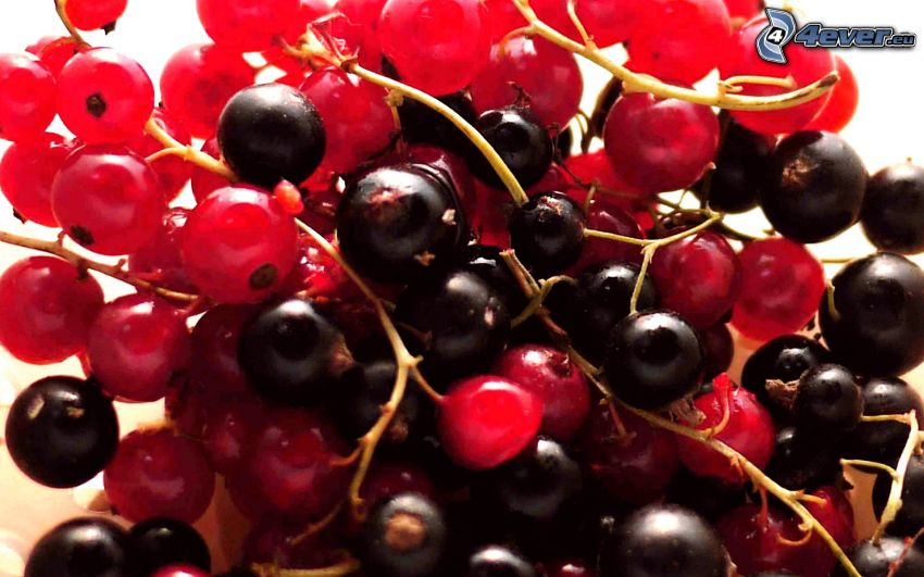 blackcurrants, redcurrants