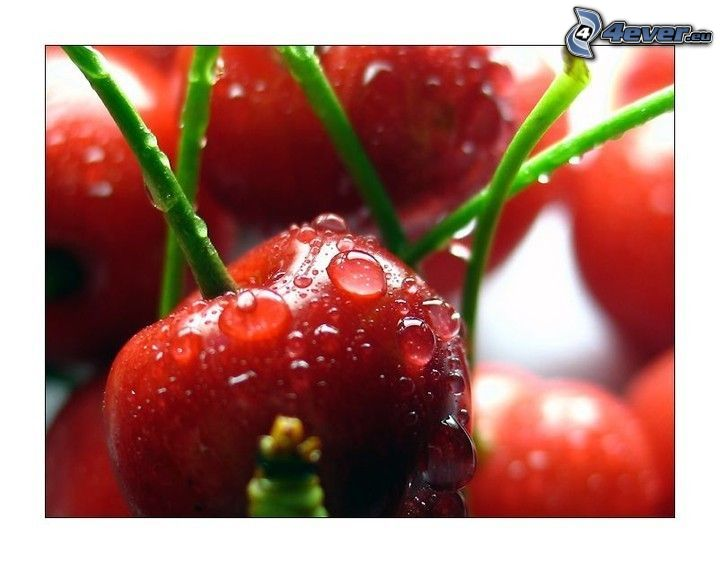 cherries, dew, drops of water