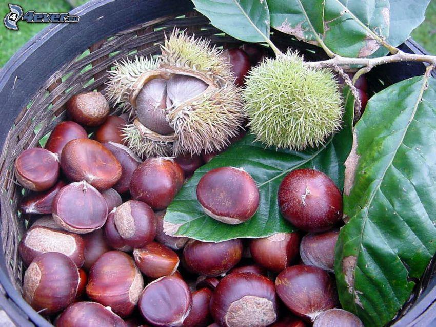 chestnuts, basket, green leaves