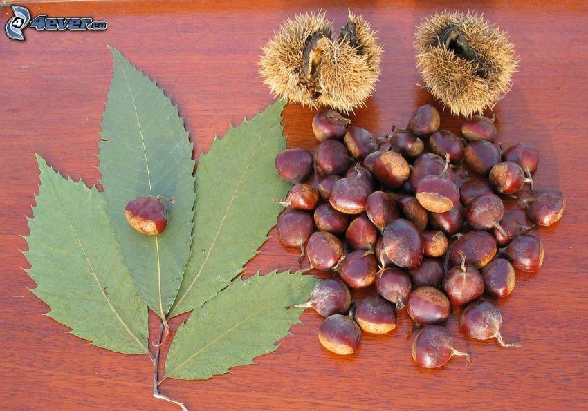 chestnuts, leaf