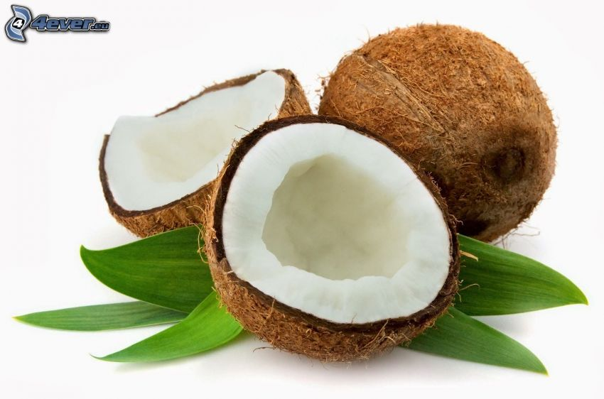 coconut, leaves