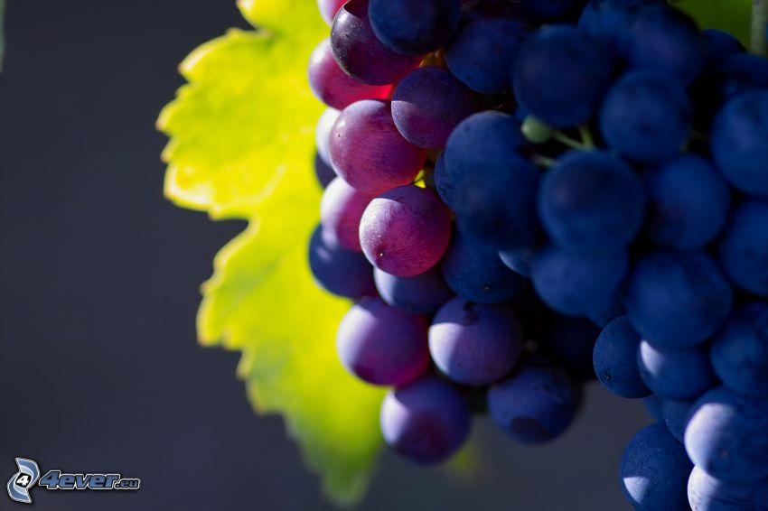 grapes, macro