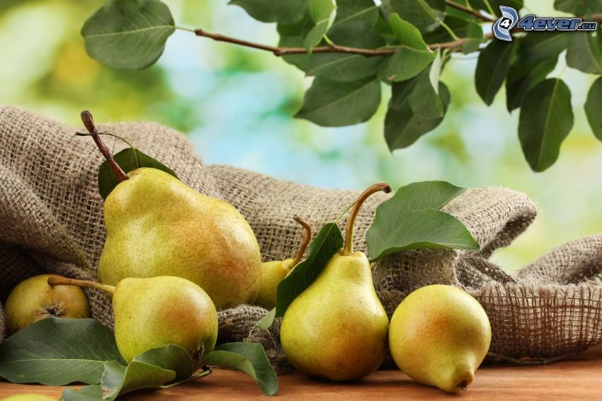 pears, twig