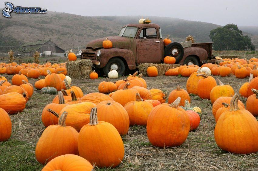 pumpkins, pickup truck
