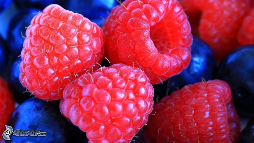 raspberries, macro