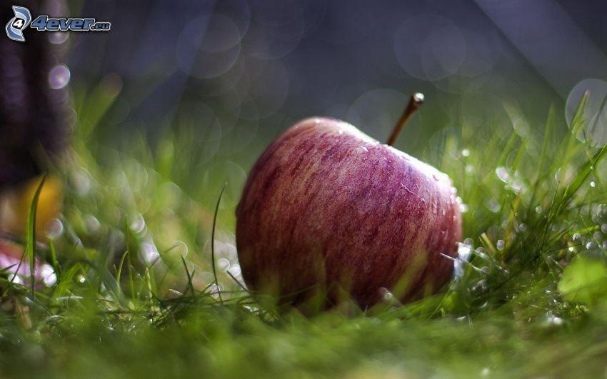 red apple, grass